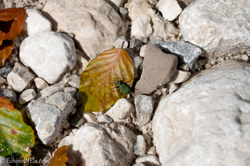 bug-on-the-rocks